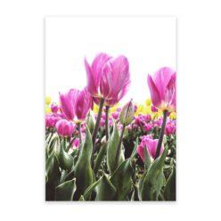 Pink Tulips Wall Art Print
