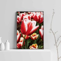Wall Art Print Red Tulip