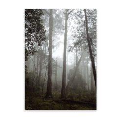 Misty Forest - Wall Art Print