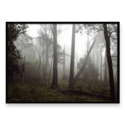 Misty Forest II HZ- Wall Art Print