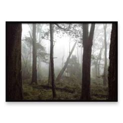 Misty Forest HZ