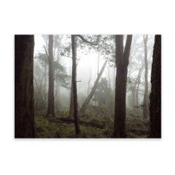 Misty Forest HZ wall art print
