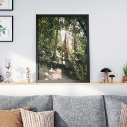 ForestLight framed insta web