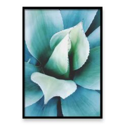 Spiky Agave - Wall Art Print