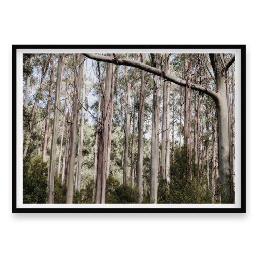 The Trees - Wall Art Print