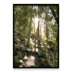 Forest Light - Wall Art Print