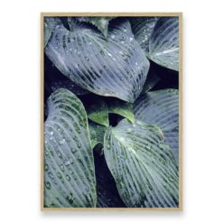 Raindrops On Leaves - Wall Art Print