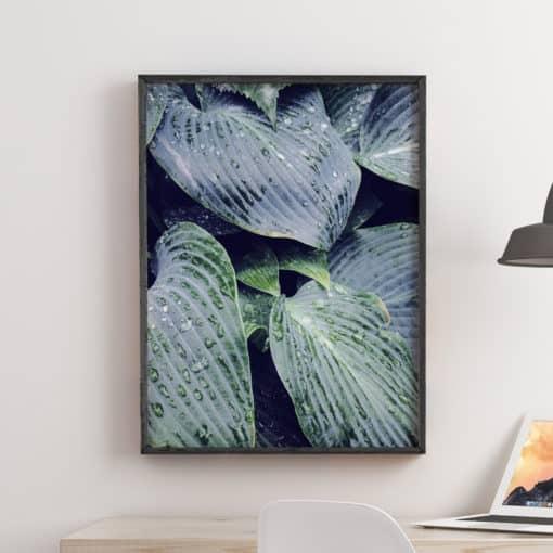 Raindrops On Leaves - Wall Art Print